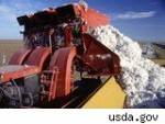 Cotton in Short Supply Drives Prices Higher