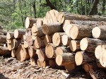 China Boosts Canada's Timber Industry